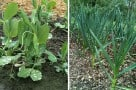 Old Dog, New Tricks: Prepping the Vegetable Garden Beds