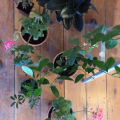 Jana's New Year's Resolution: Indoor Gardening!